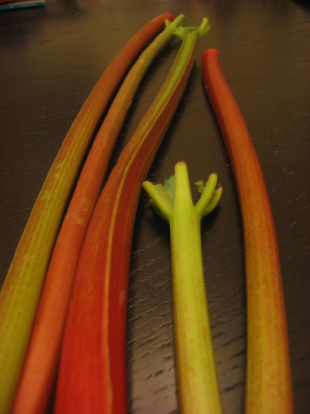 Rhubarb
